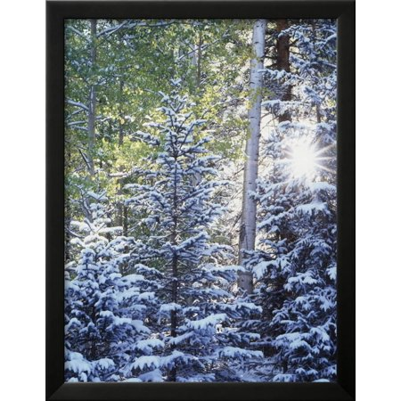 Colorado san juan mountains first snow in the forest framed print wall art by