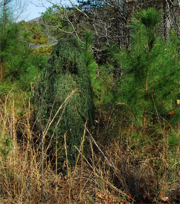 Click here to buy Ghillie Suits Ghillie Poncho Synthetic Ultra light Leafy Green by Ghillie Suits.