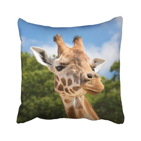 BPBOP Brown Face Front On View Of Giraffe Against Green Foliage And Blue Sky Orange Animal Pillowcase Pillow Cushion Cover 16x16