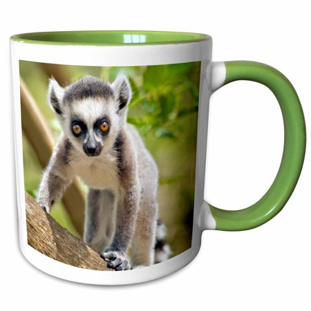 3dRose Baby ring-tailed lemur, Anja private community reserve, Madagascar. - Two Tone Green Mug, 11-ounce