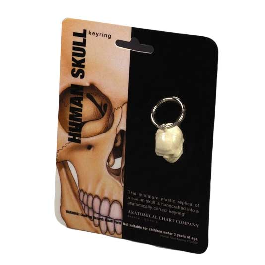 Anatomical Human Skull Key Ring