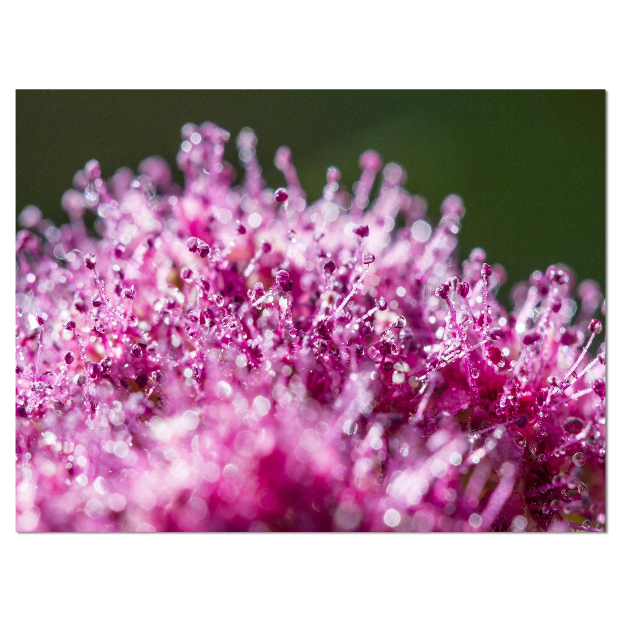 Pink Little Flowers Close up View - Large Floral Wall Art Canvas - image 2 de 3