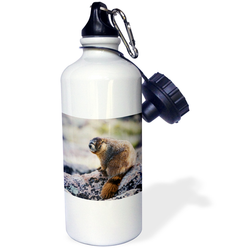 3dRose Yellow-bellied Marmot wildlife, Rocky Mountain NP NA02 RNU0850 Rolf Nussbaumer, Sports Water Bottle, 21oz by Supplier Generic