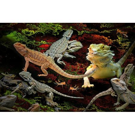 Lizard Point - LAMINATED POSTER Pogona Bearded Dragons Animals Lizards Agamas Poster Print 24 x 36