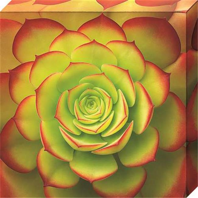 North American Art NC1127 10 x 10 in. Fiery Succulent Canvas Gallery Wrapped Art Print
