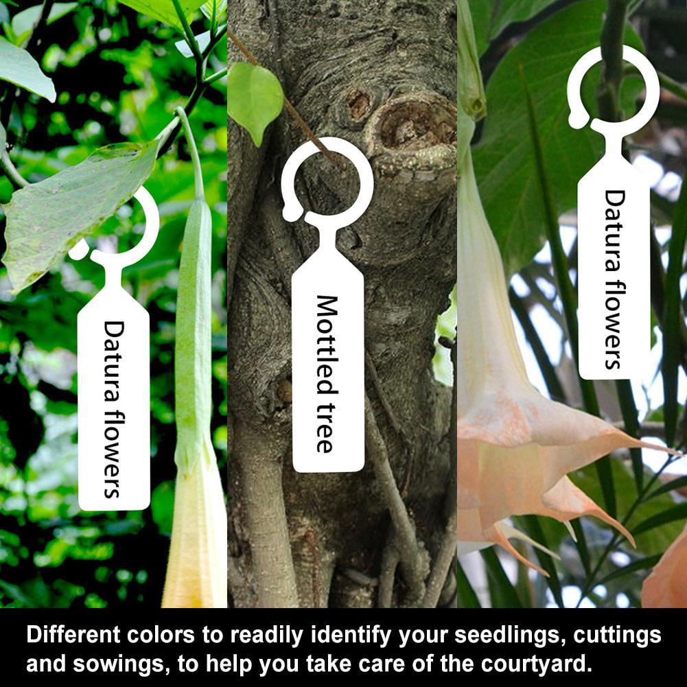 Étiquettes de plantes suspendues en plastique 100 PCS plante arbre pépinières ét