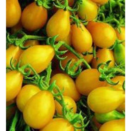 Pear Tomatoes (Tomato Yellow Pear Great Heirloom Garden Vegetable 200 Seeds )