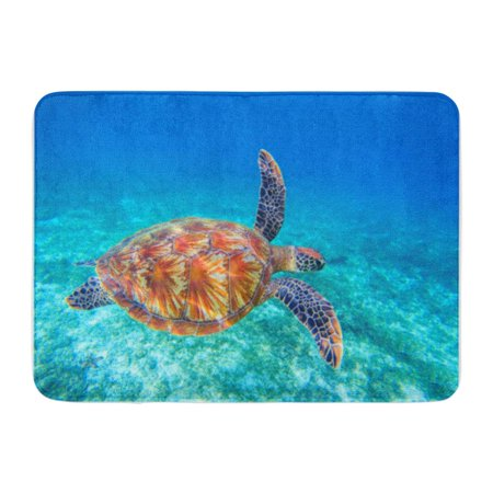 SIDONKU Sea Turtle Swims in Water Olive Green Closeup Wildlife of Tropical Coral Reef Doormat Floor Rug Bath Mat 23.6x15.7 inch ()