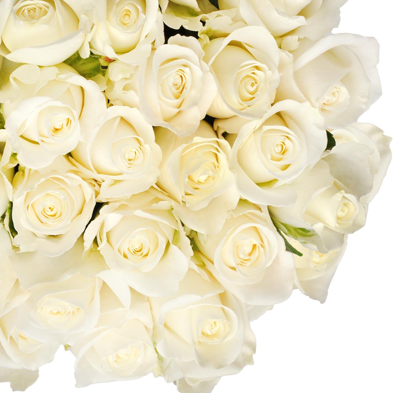 """Natural Fresh Flowers - White Roses, 20"""", 50 Stems"""