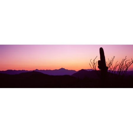 Saguaro Cactus with mountain range in the background Phoenix Maricopa County Arizona USA Stretched Canvas - Panoramic Images (27 x