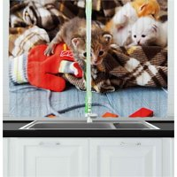 Cats Curtains 2 Panels Set, Kittens and Mittens Newborns Baby Animals in an Plain Blanket Wood Play Toys Adorable, Window Drapes for Living Room Bedroom, 55W X 39L Inches, Multicolor, by Ambesonne