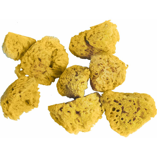 Sea Sponges, 8-Pack