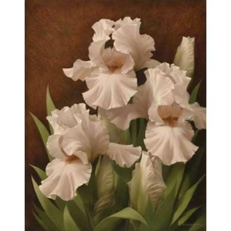 Iris Illumination II Stretched Canvas - Igor Levashov (11 x 14)