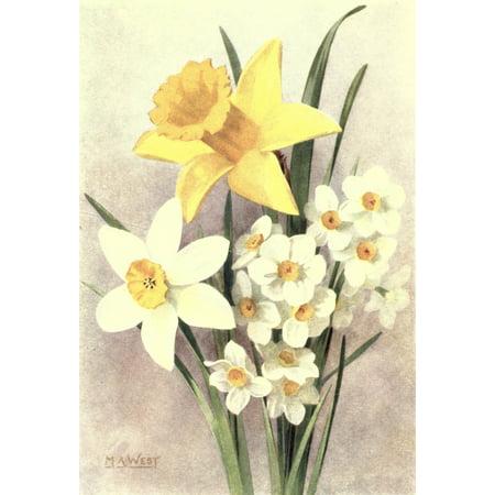 Daffodil Bulb - Bulb Gardening 1922 Daffodils Stretched Canvas - M Astley West (24 x 36)