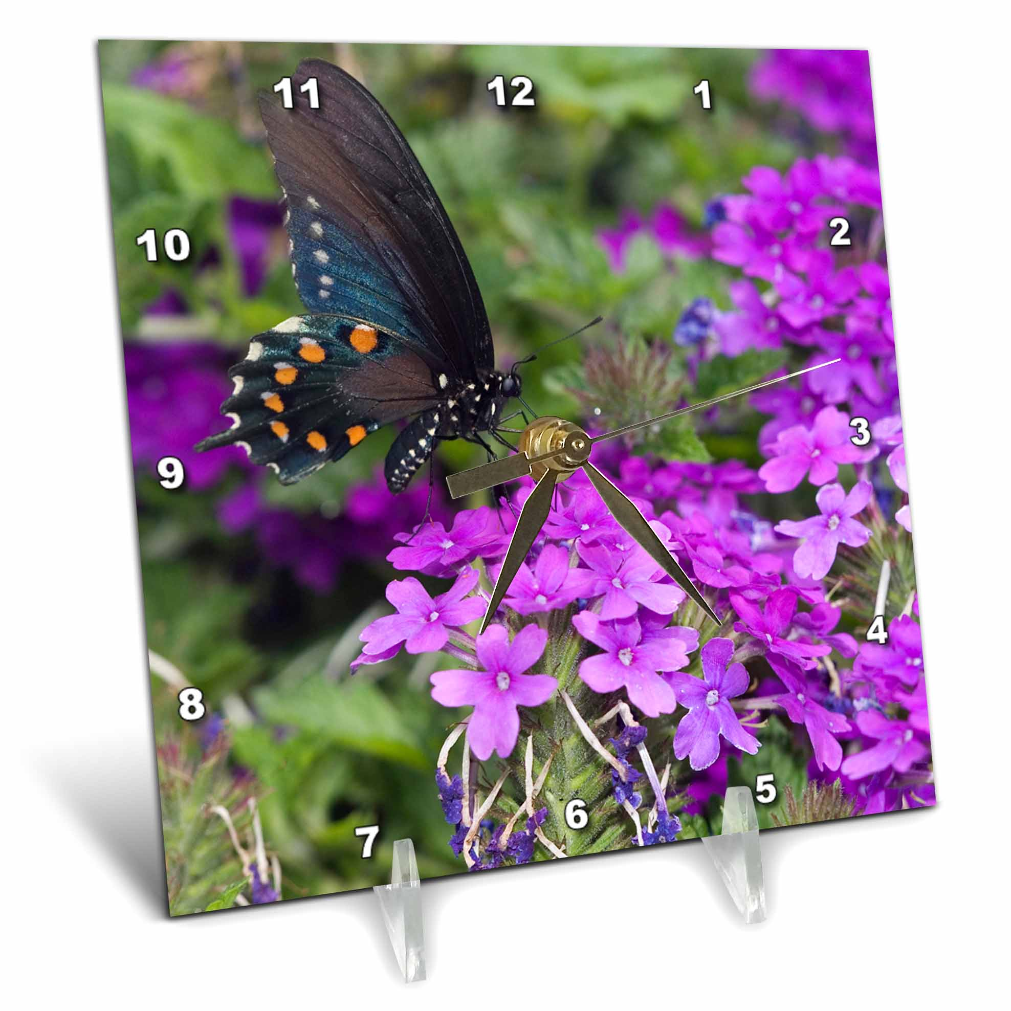3dRose Pipevine Swallowtail on Homestead Purple Verbena, Marion Co. IL, Desk Clock, 6 by 6-inch