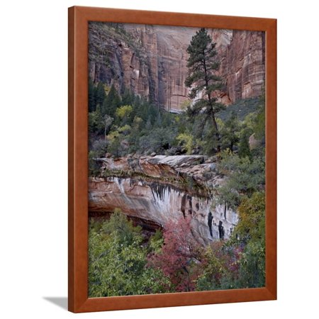 Evergreens, Red Maples, and Red Rock on the Emerald Pools Trail, Zion National Park, Utah, USA Framed Print Wall Art By James Hager ()