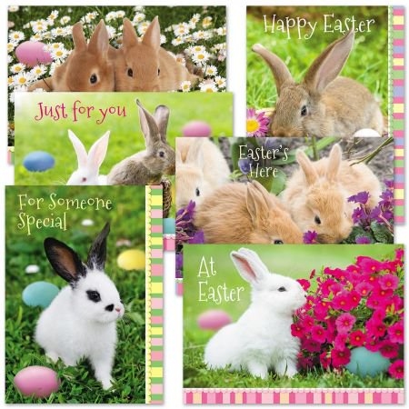 Photo Bunny Easter Cards Value Pack - Set of 12 (2 of - Easter Car