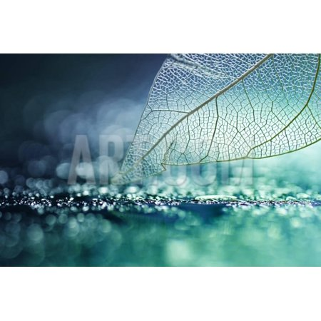 White Transparent Skeleton Leaf with Beautiful Texture on a Turquoise Abstract Background on Glass Print Wall Art By Laura Pashkevich (Halloween Clip Art Transparent Background)