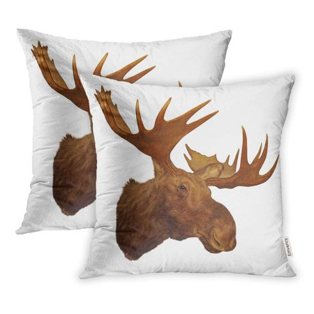 Moose Trophy Antler - USART Taxidermy Moose Head Antler White Animal Trophy Big Rack Wilderness England Prize Pillow Case Pillow Cover 18x18 inch Set of 2