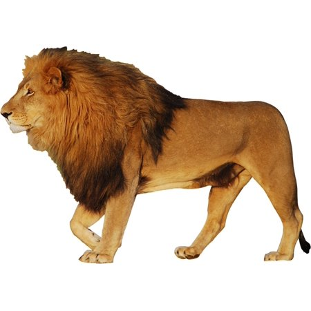 VWAQ Lion Wall Art Sticker Decal African Animal Wall Decor Peel And Stick Mural VWAQ-PAS1 (20
