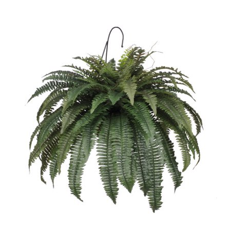 House of Silk Flowers Inc. Artificial Fern Hanging Plant in Basket