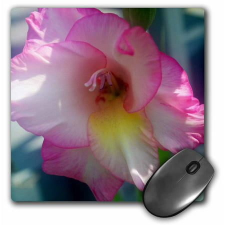 3dRose Garden gladiolus with dark pink on the edges, Mouse Pad, 8 by 8 inches