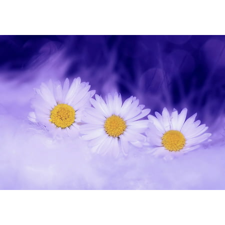 LAMINATED POSTER Daisy White Plant Flowers Spring Nature Blossom Poster Print 24 x 36