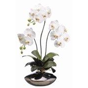 "31"" White Phalaenopsis Orchid Plant in Ceramic Pot"