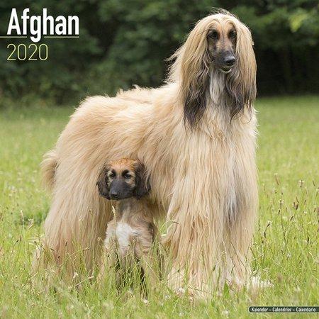 Afghan Calendar 2020 - Afghan Dog Breed Calendar - Afghans Premium Wall Calendar 2020