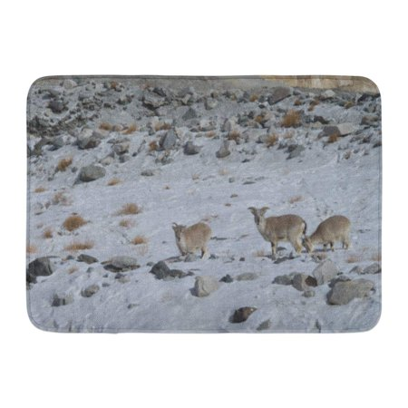 GODPOK Mammal Animal Blue Sheep Chang Tang Ladakh India Himalaya Mountains Rug Doormat Bath Mat 23.6x15.7 inch (Tangs Store)