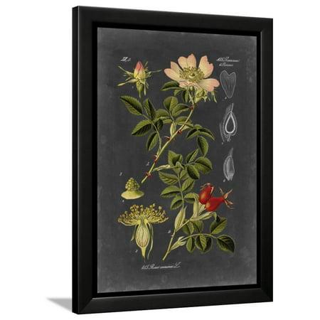 Midnight Botanical I Framed Print Wall Art By Vision Studio