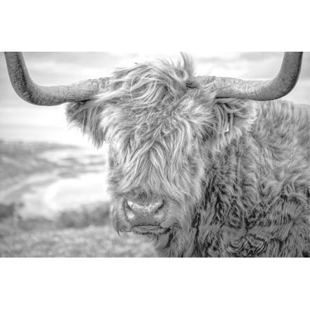 Highland Cows III Black and White Cattle Photo Print Wall Art By Joe - Reynolds Photo