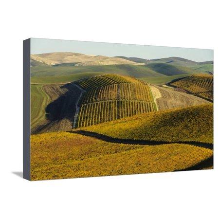 Washington State, Walla Walla. Spring Valley and Vineyards Stretched Canvas Print Wall Art By Richard (Syrah Walla Walla Valley Powerline Estate 2014)