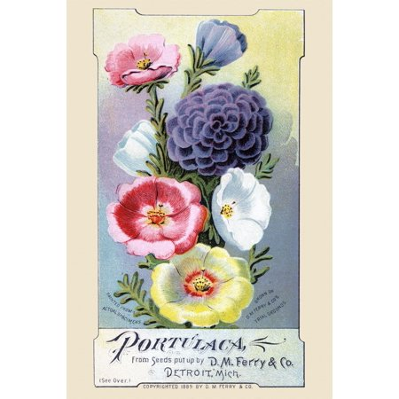 Ferrys Seed - Victorian trade card for a seed company DM Ferry & co showing the actual flowers you can grow Poster Print by unknown