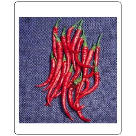 Pepper HOT Cayenne Long Slim Great Heirloom Vegetable 100 Seeds Pepper 100 Seeds
