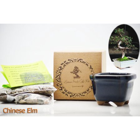 9Greenbox   Chinese Elm Bonsai Seed Kit  Gift   Complete Kit To Grow  Chinese Elm Bonsai From Seed