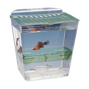 Penn Plax Breed and Show Nursery Fish Tank