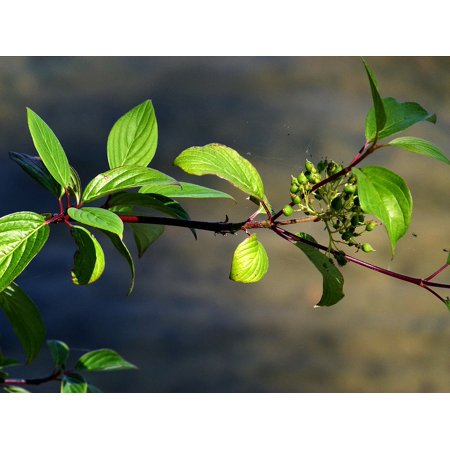 Framed Art for Your Wall Floral Leaves Flora Berries Branch Wild Berry 10x13 (Berry Branch)