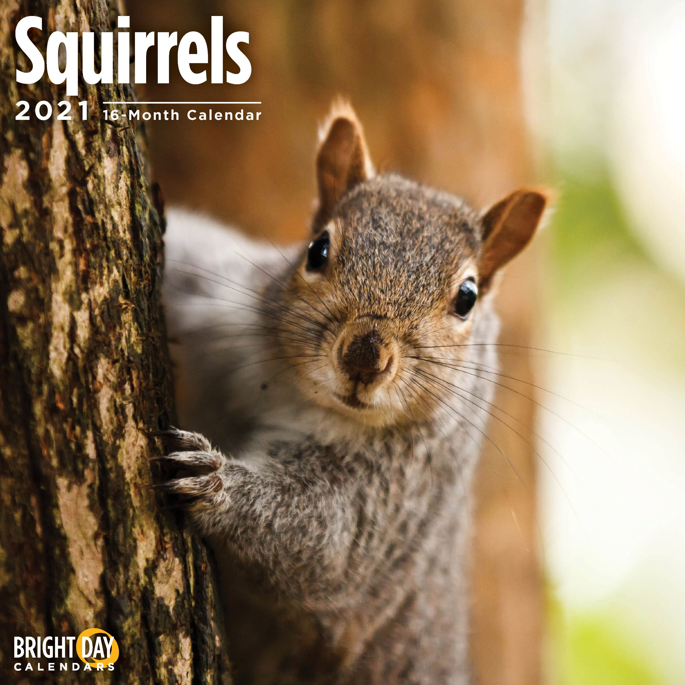 2021 Squirrels 12 x 12 Wall Calendar Cute Woodland Critter Small