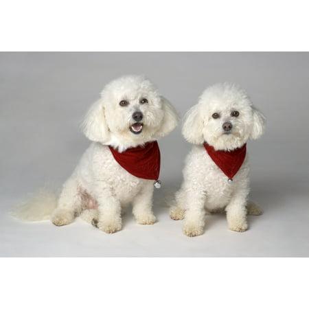 Pair Of Pedigree Dogs Stretched Canvas - Corey Hochachka  Design Pics (17 x 11) ()