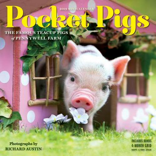Pocket Pigs Mini Wall Calendar 2019: The Famous Teacup Pigs of Pennywell Farm (Other)