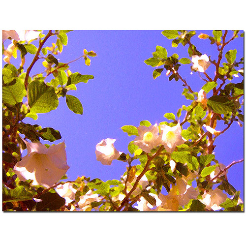 "Trademark Fine Art ""Flowering Tree II"" Canvas Wall Art by Amy Vangsgard"