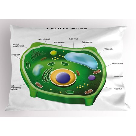 Educational Pillow Sham Plant Cell Biology Research Botany Anatomy ...