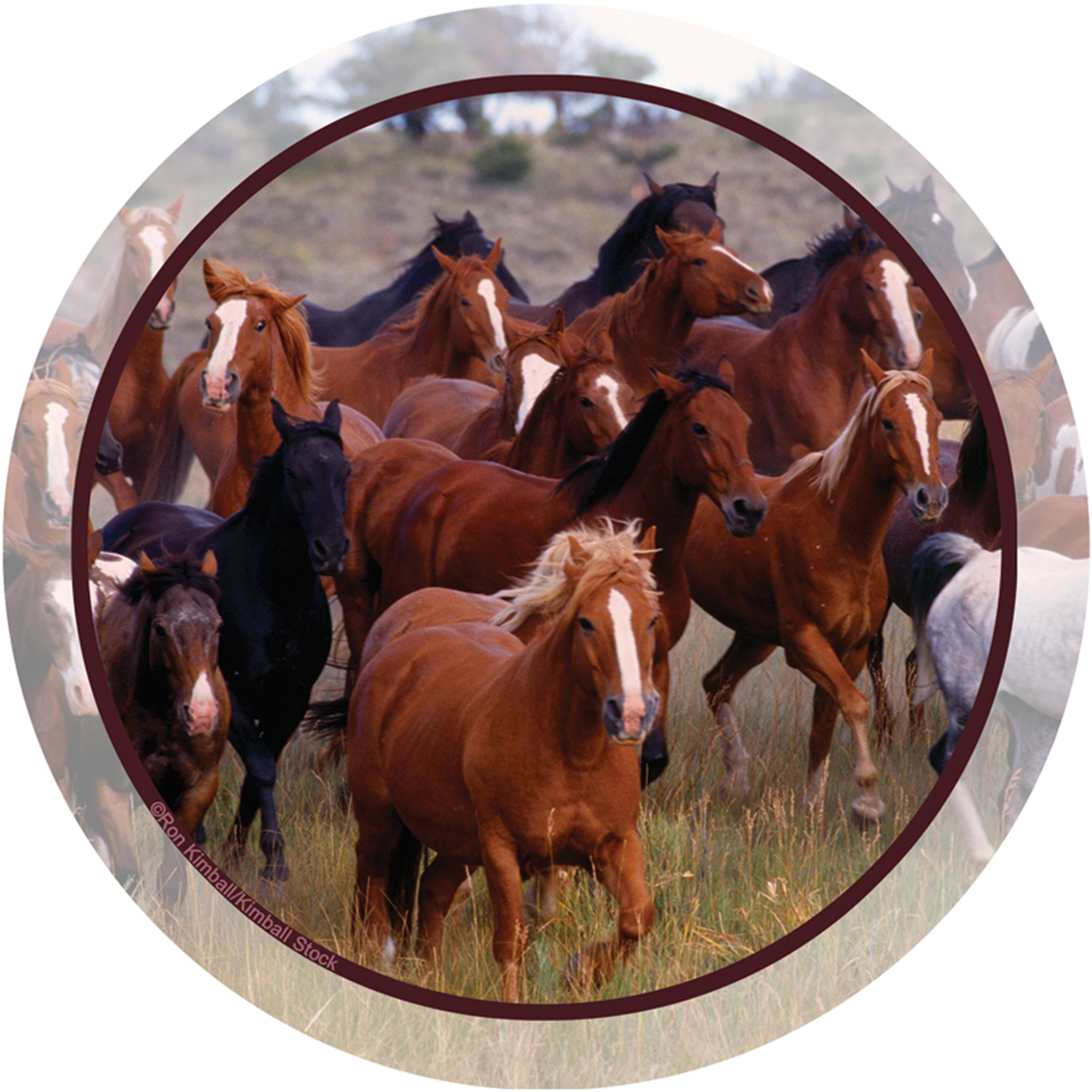 Thirstystone Occasions Drink Coasters, Horse Collage
