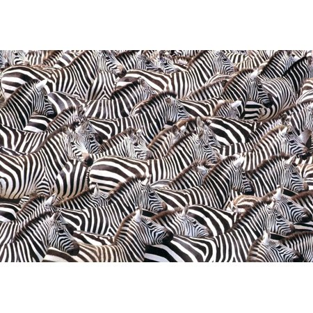 Framed Art for Your Wall Zebras African Black And White Stripes 10 x 13 (13' Stripes)