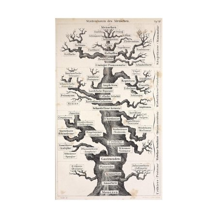 1874 Haeckel First Full 'tree of Life' Print Wall Art By Stewart