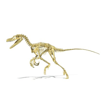 3D rendering of a Velociraptor dinosaur skeleton Stretched Canvas - Leonello CalvettiStocktrek Images (36 x