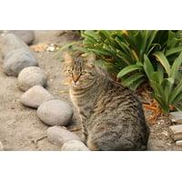 LAMINATED POSTER Feline Animal Cat Pet Poster Print 24 x 36