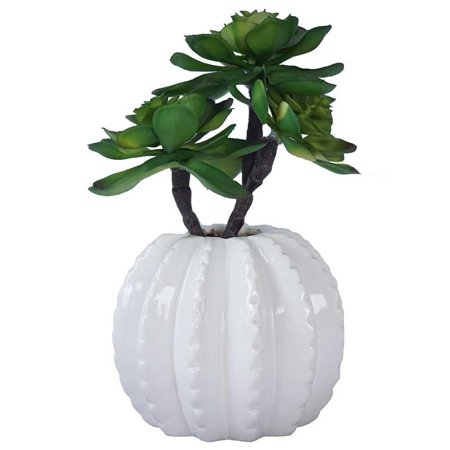 Laura Ashley Vha102469 Succulents In Ceramic Vase44 Matte