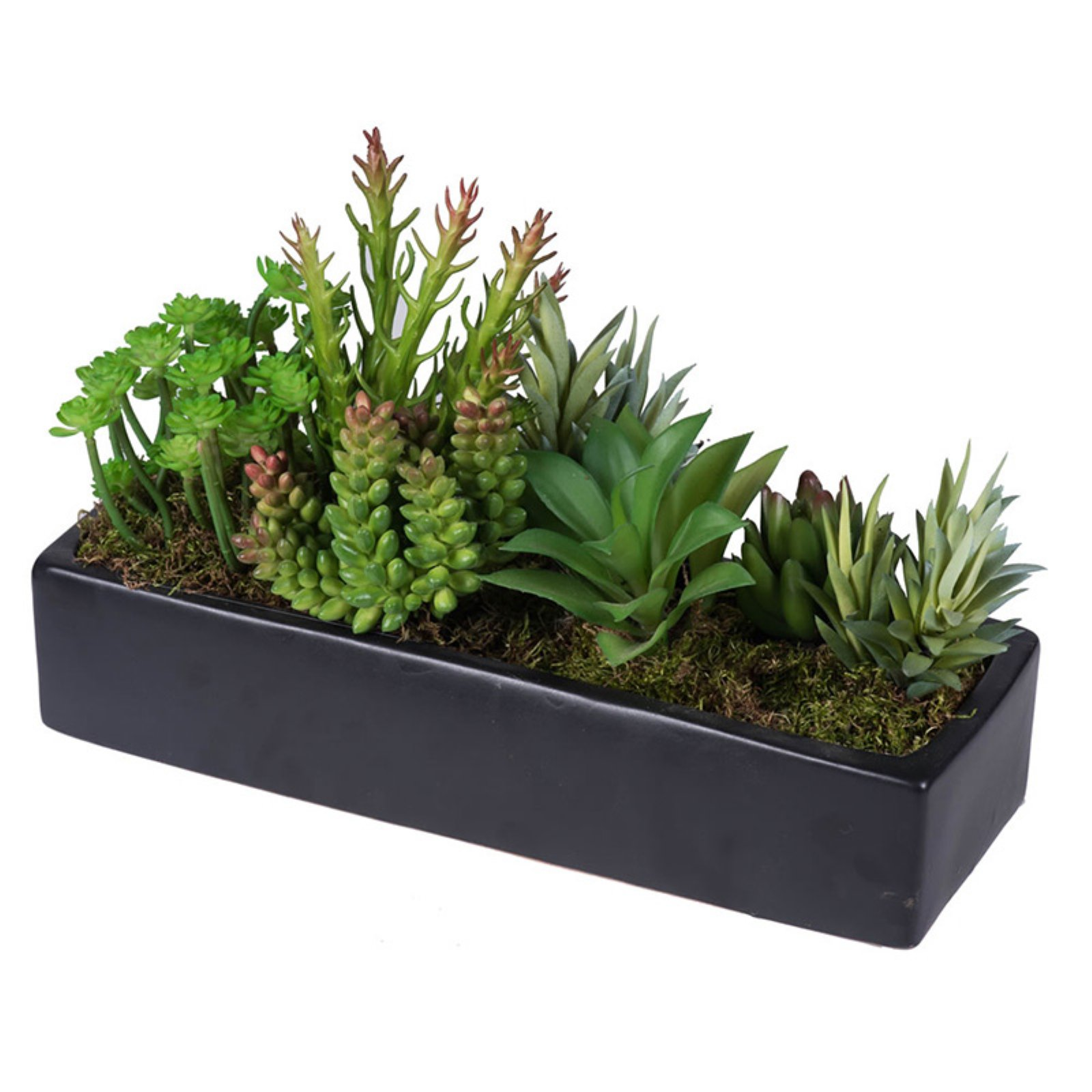 "Vickerman Tastefully Arranged Variety of Succulent Plants in 12"" Black Tray"